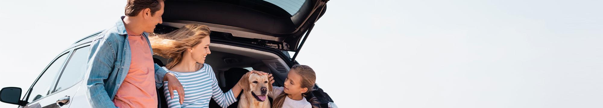 Quines cobertures necessites per a la teva assegurança de cotxe | Medicorasse